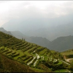 rice fields on the mountains around Sapa