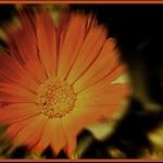 flower-old-style.jpg