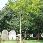 The cemetery next to the church.