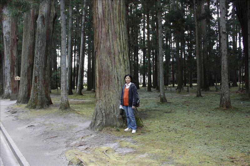 老婆站在古木旁更顯嬌小