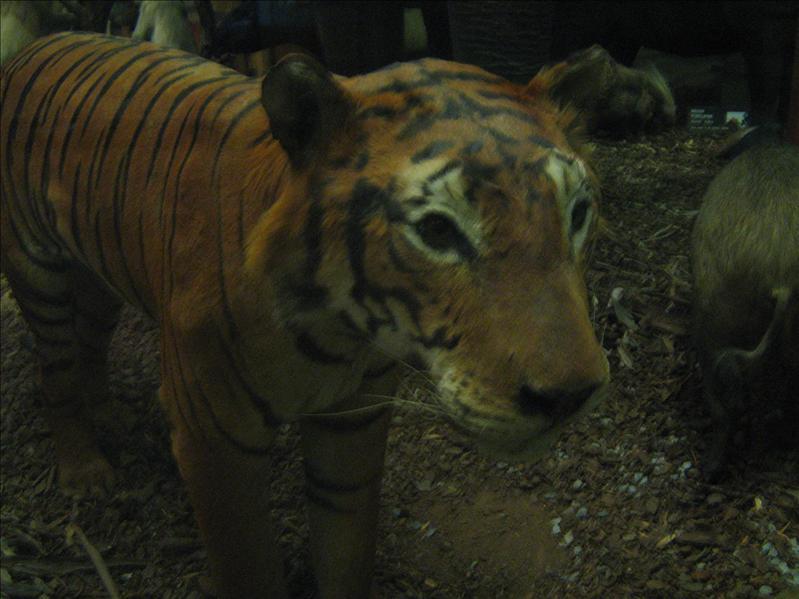 Stuffed Animals in Museum