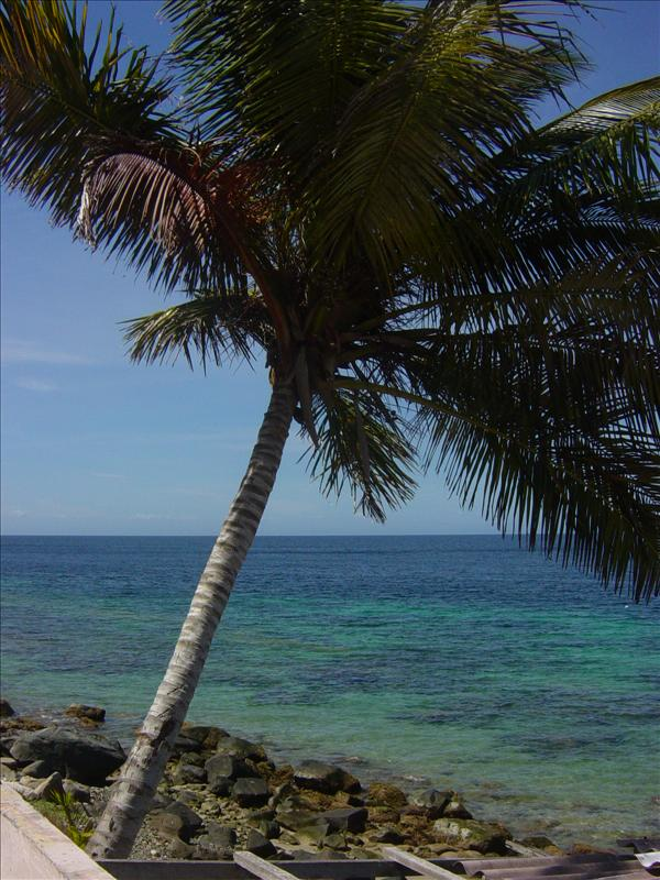 Palmtree at the sea