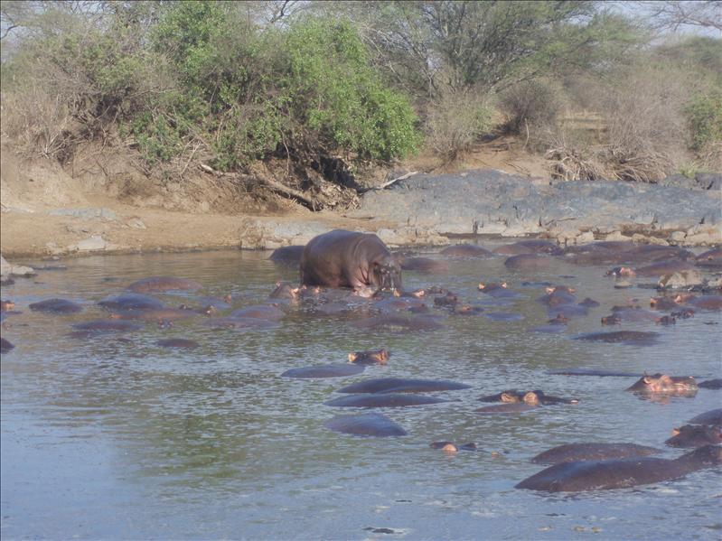 Hippo pond, Lake Manyara