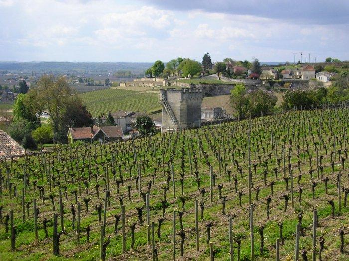 St Emilion is devoted to wine.