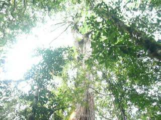 司馬庫斯巨木 (3).MOV