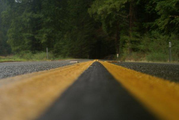 A Road-kill's view