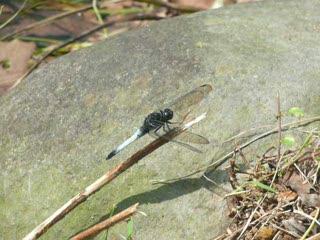 蜻蜓.MOV