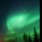 green-firs.jpg