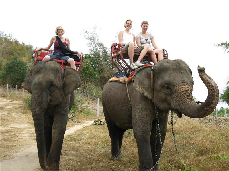Weihnachts-Elefantenreiten
