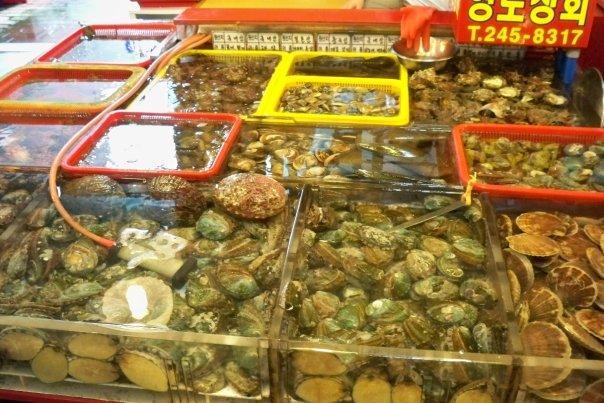 07/27 - jagalchi fish market -  shellfish, oysters, clams