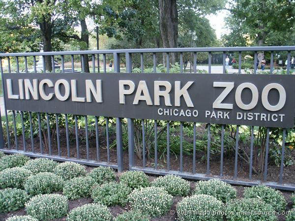 lincoln park zoo.1.JPG