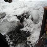 snow day 012.JPG