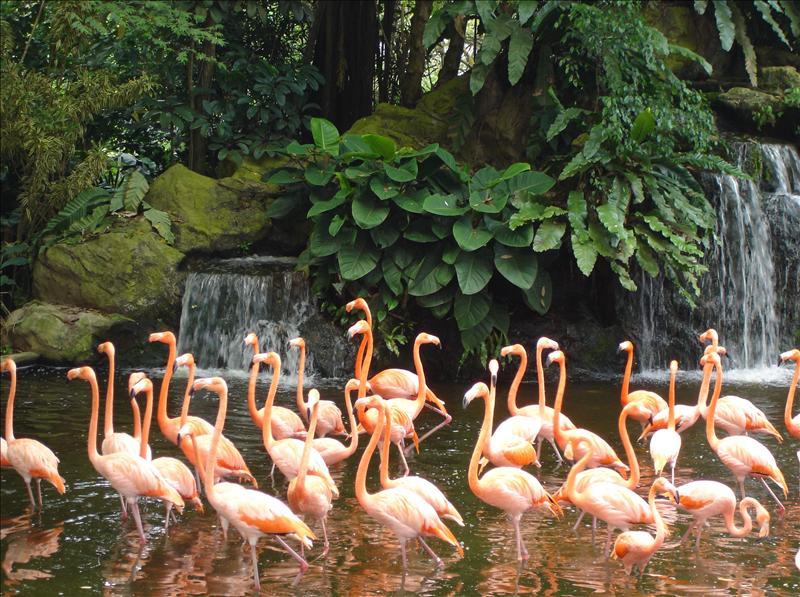 Jurong Bird's Park 2008