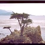 Monterey, 17 miles, Carmel