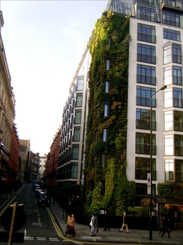 a garden up a wall