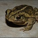 frog 047.jpg