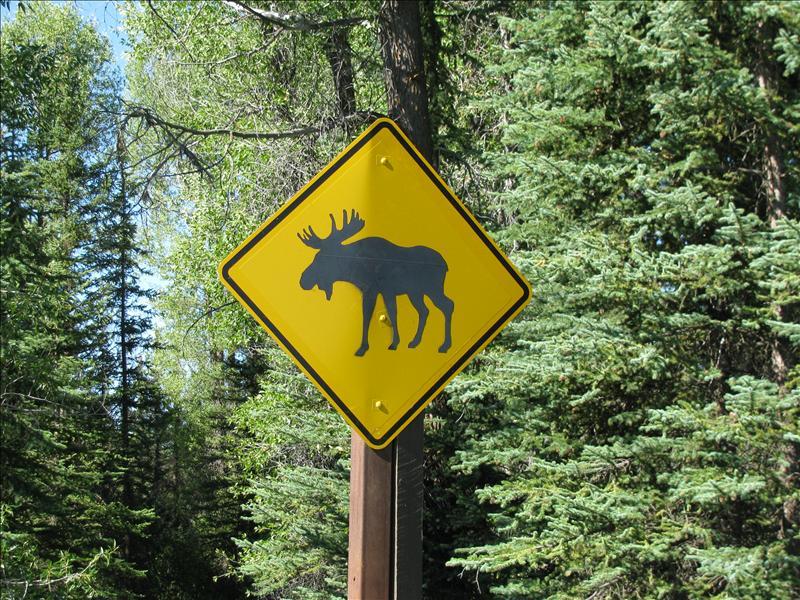 pas op voor moose, en jawel hoor, we zagen er ook nog een paar