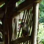 Our little friends (Squirrell Monkeys)