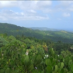 View of Barbados countryside