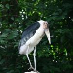 BirdPark-01.jpg