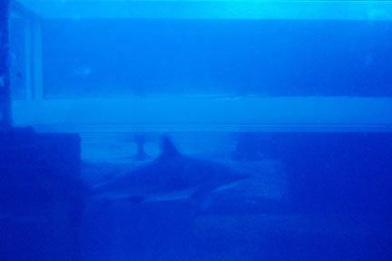 Le tube est le point d'arrivée d'une glissade...Et oui, on atterit dans un aquarium de requins!