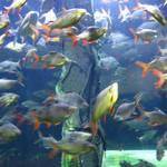 Rondo dla rybek. To było duże akwarium w kształcie walca, z drzewem w środku. Rybki pływały do okoła.