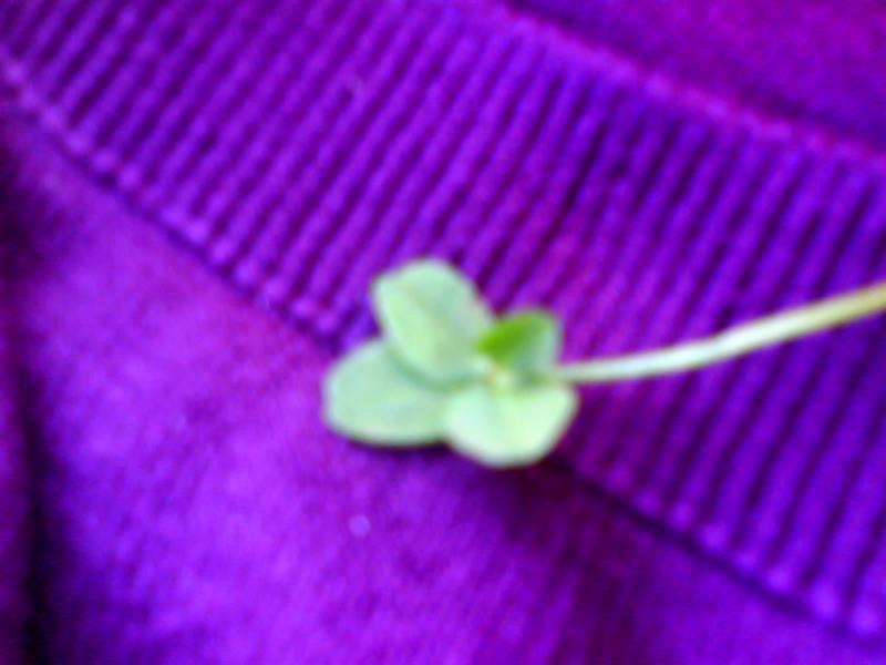 4 leaf clover!