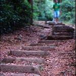 20101114 龍門郊遊徑 (松樹徑) Lung Mun Country Trail