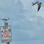 St Petersburg FL Races and Harbor 4-19-21-12 276.jpg