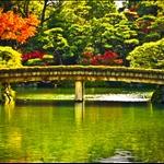 19 Nov '08 - Sorakuen Garden