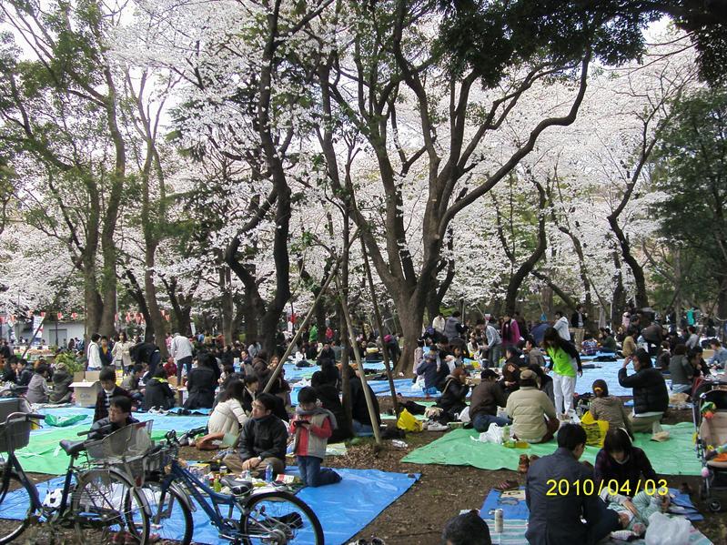 超有FU的賞櫻聖地-上野公園