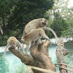 獼猴.JPG