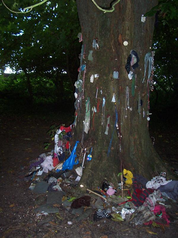 Saint Brendan's Tree.