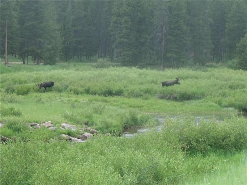 Moose! Stop! Moose!