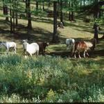 Huvsgul horsetrips