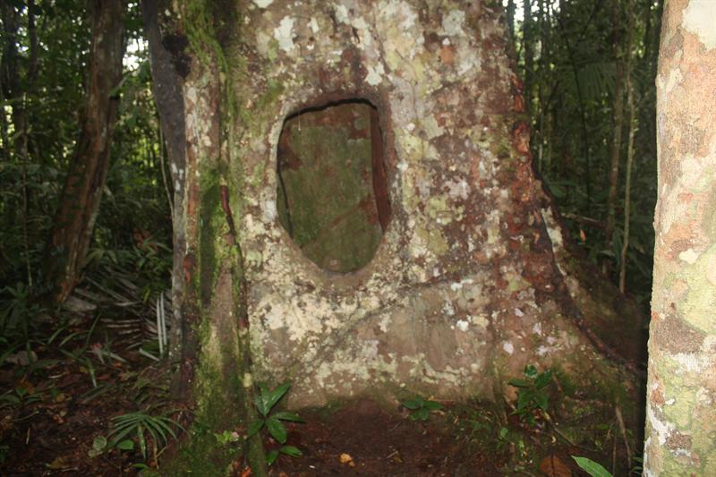 Big old tree!!