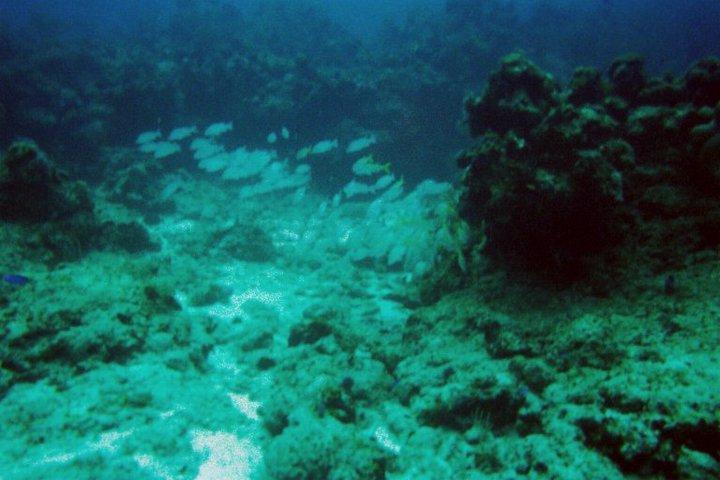 under water 6