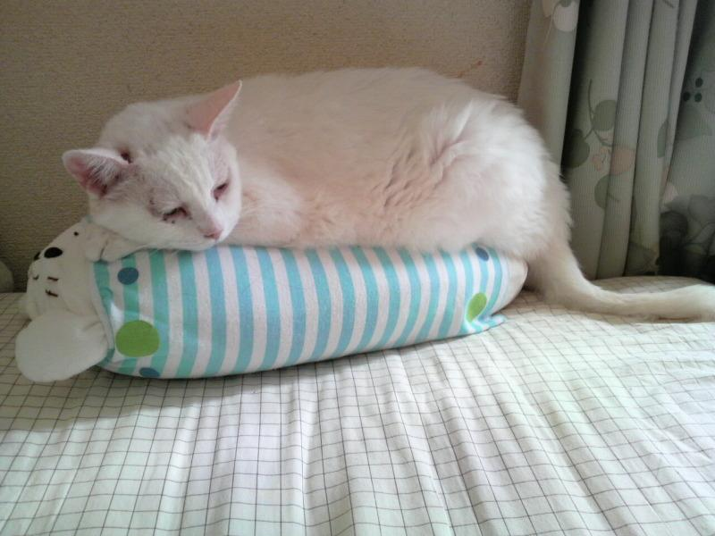 My pillow …