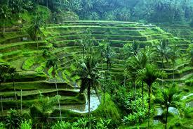 Ubud, Bali - there is where I want to be