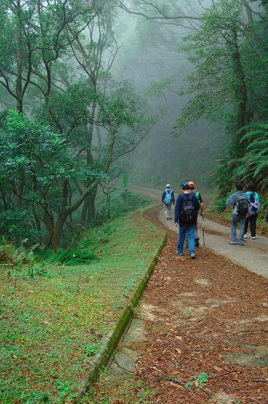 Shing Mun Forest Track城門林道