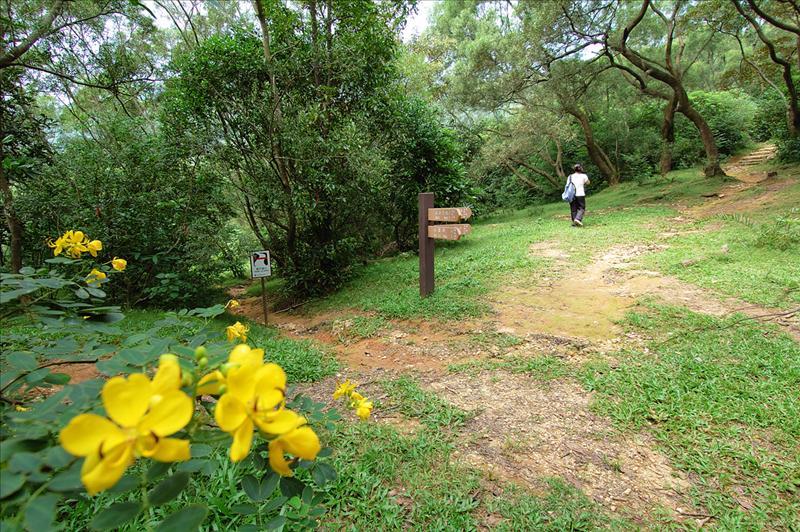 Toward MacLehose Trail Stage 9 續上麥理浩徑第九段
