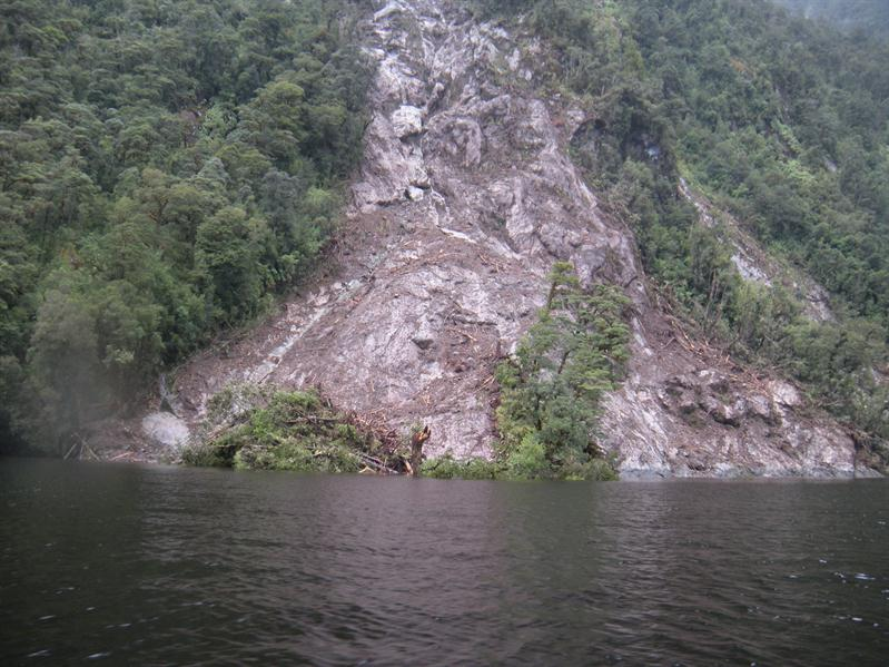 A tree avalanche in Doubtful Sound