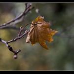 20091206-IMG_6932.jpg