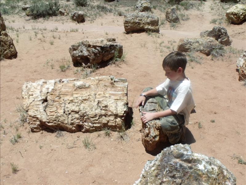 Mediating by petrified wood