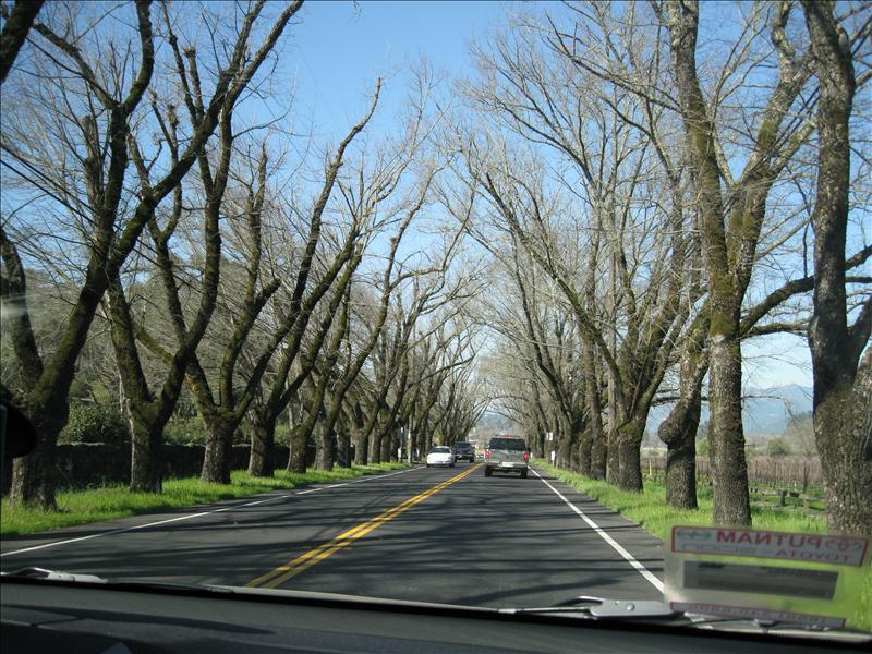 Driving through Napa Valley