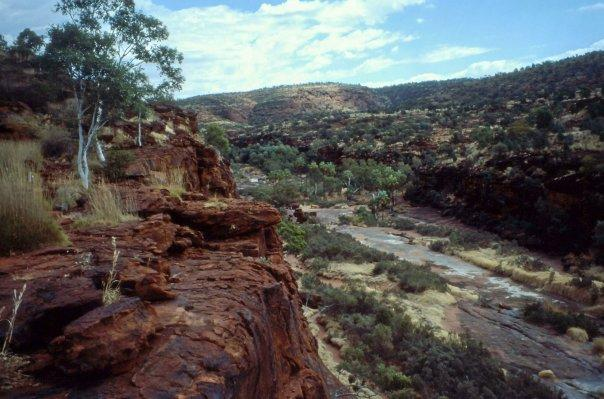 PALM VALLEY, FINKE GORGE, NT