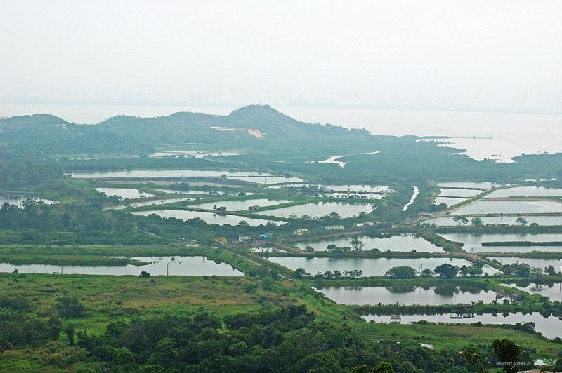 Fish Ponds and Wetland魚塘濕地
