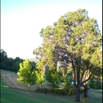 Golf Course in Araluen