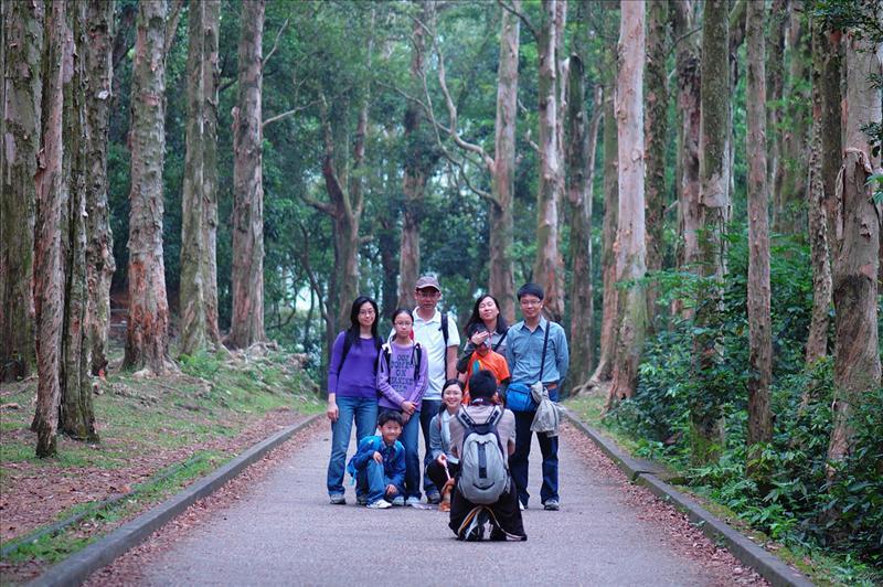 白千層步道 Melaleuca quinquenervia  (Paper-bark trees)