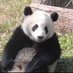 panda research base  nov09